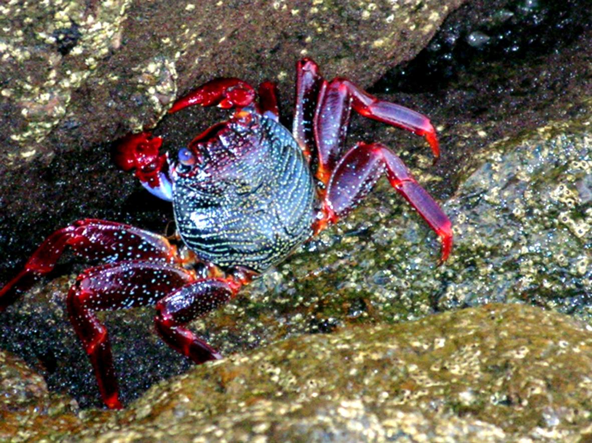 rico puerto rican crab recipe quebradillas puerto rico puerto rican ...